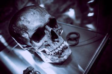 Ancient Skull on Display