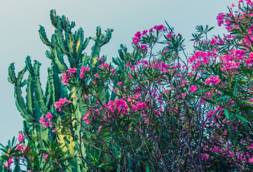 Arizona Nature With Flowering Bushes And Cactus.