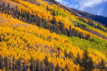Autumn Foliage Colorado