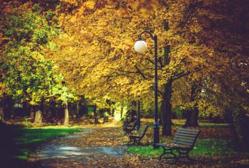 Autumn Foliage in Park