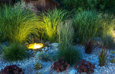Backyard Garden illumination