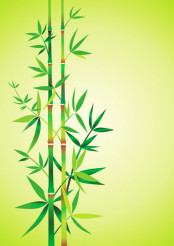 Bamboo Theme Vector
