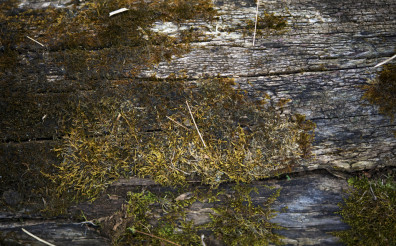Bark and Moss Background