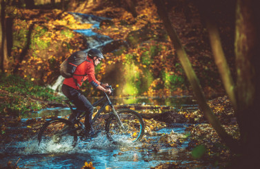 Bike RIde in the Forest