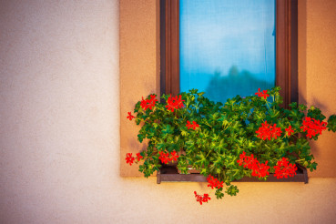 Blooming Window Flowers