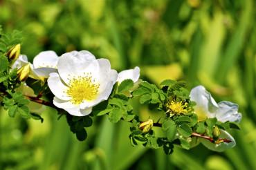 Blossom Branch Closeup