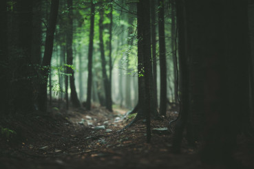 Broad Leaf Forest Trail