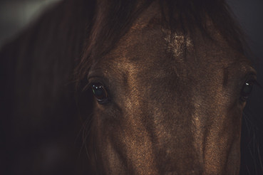 Brown Horse Look Closeup