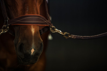 Brown Race Horse
