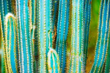 Cactus Specie