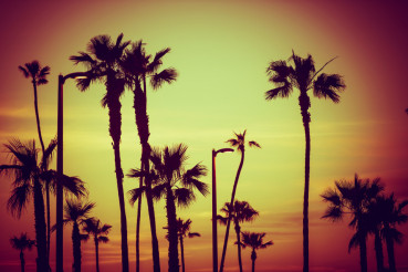 California City Palms