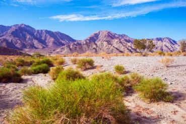 California Desert Lands