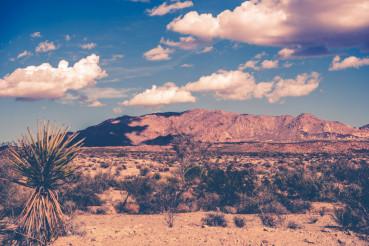 California Desert Theme