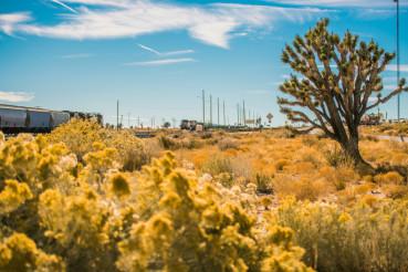 California Mojave Desert