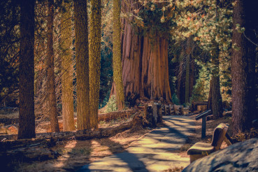 California Sequoia National Park Scenic Pathway Trail
