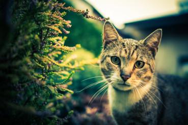Cat Outdoor Portrait