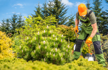 Caucasian Gardener Insecticide and Fungicide His Plants