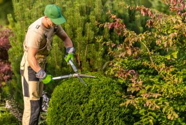 Caucasian Gardener Trimming Garden Plants