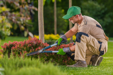 Caucasian Professional Garden Worker Trimming Plants