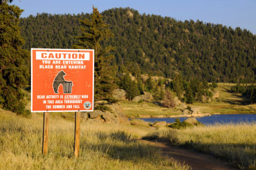 Caution Black Bear