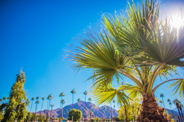 Coachella Valley Vegetation