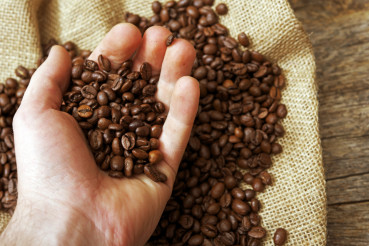 Coffee Beans Examination