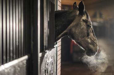 Cold Day in Equestrian Facility