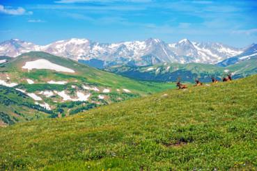 Colorado Panorama with Elks