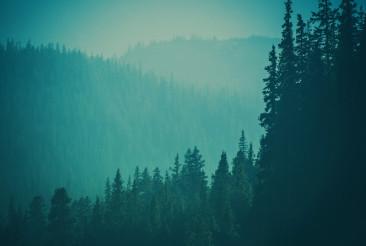 Colorado Woodland Landscape Background
