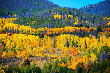 Colorful Colorado Autumn