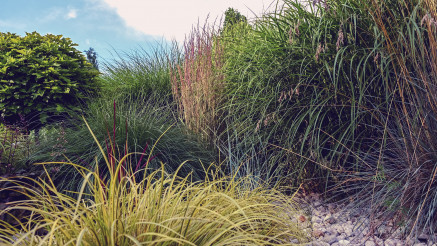 Colorful Garden Decorative Grasses