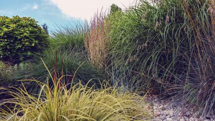 Colorful Garden Decorative Grasses
