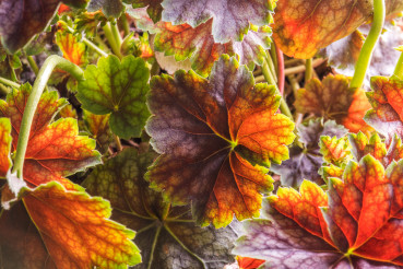 Colorful Plant Leaves Close Up Macro Photo