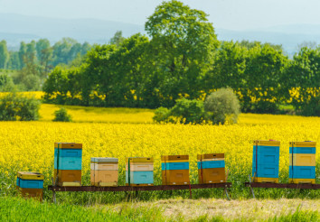 Colorful Wooden Apiaries