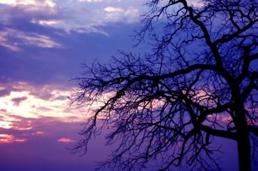 Creepy Sunset Tree