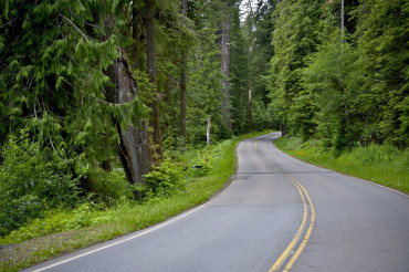 Curved Forest Road