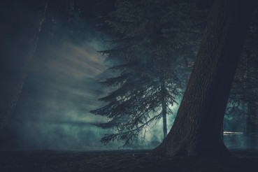 Dark Mysterious Forest Covered by Strange Fog