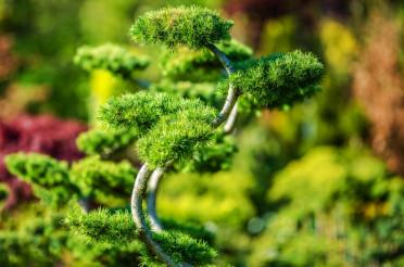 Decorative Garden Tree