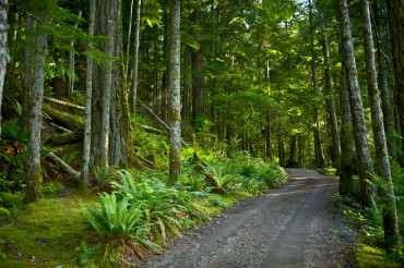 Deep Forest Road