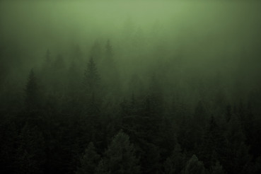 Dense Forest Foggy Weather