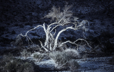 Desert Flora at Night