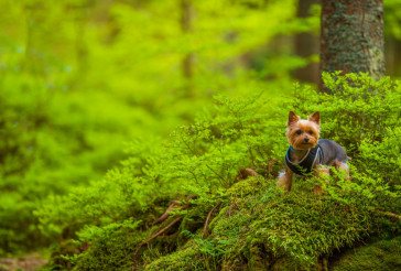 Dog on the Forest Trail Walk
