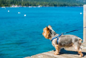 Dog Walk at the Lake