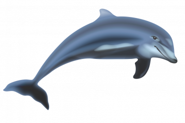 Dolphin Isolated PNG Graphic