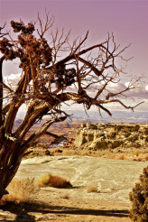 Dry and Raw Utah