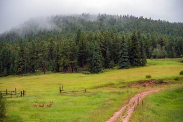 Elk Gang on the Meadow