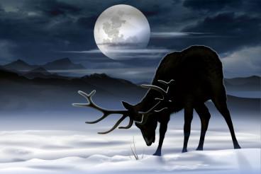 Elk Winter Meadow