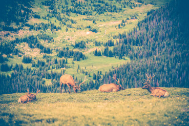 Elks Meadow