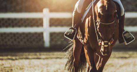Equestrian Facility Horse Rider