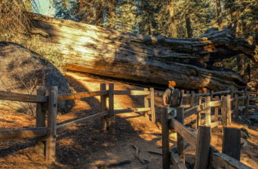 Exploring Giant Sequoia Grove
